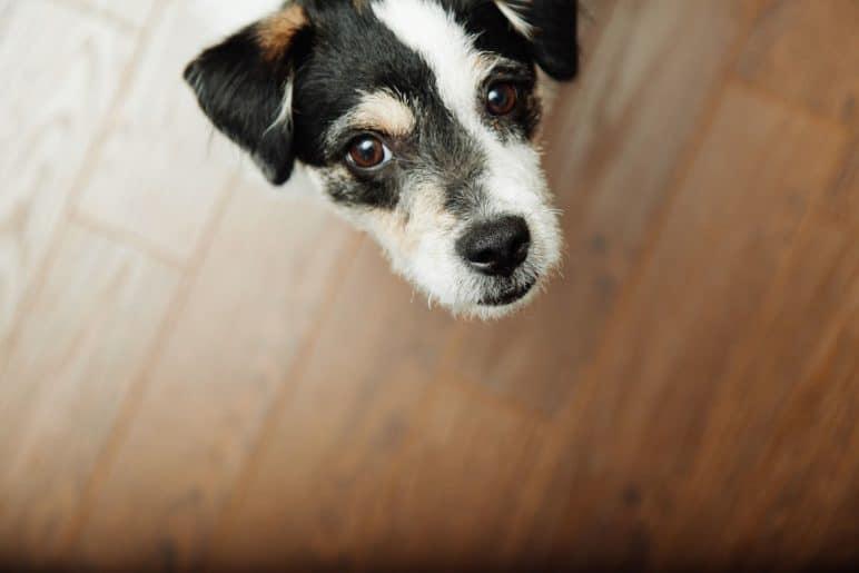 7 oznak wskazujących na to, że dom jest przyjazny psom
